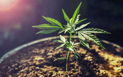 The Power of Education-Based Marketing for the Cannabis Industry